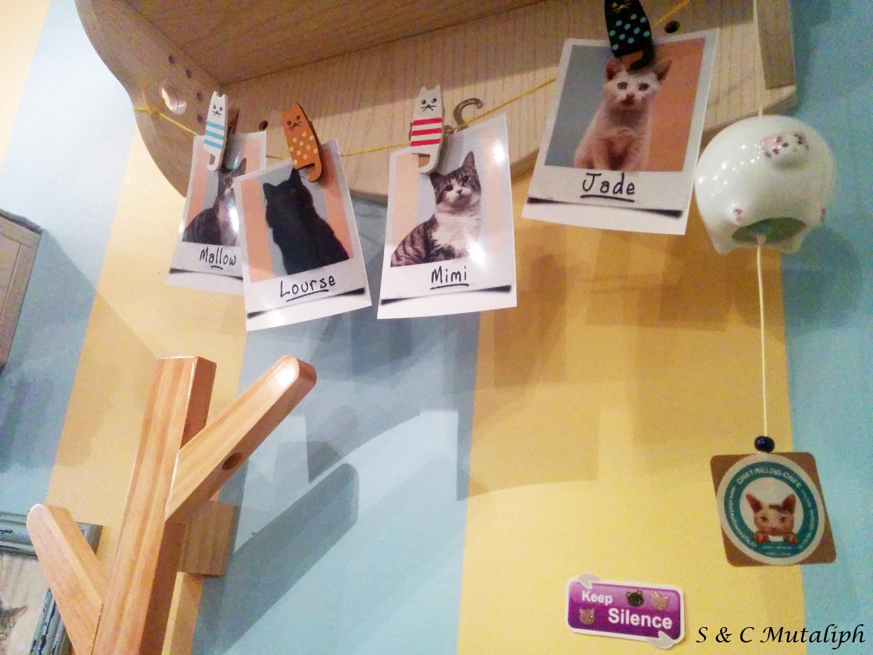 chat mallows caf le bar chats paris la paire de jumelles. Black Bedroom Furniture Sets. Home Design Ideas